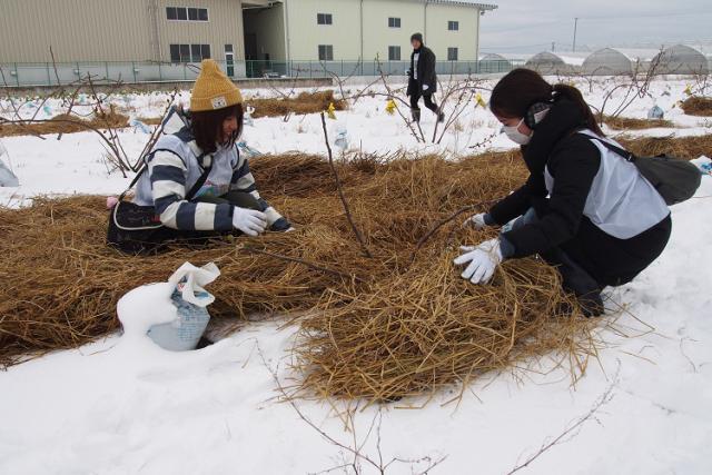 冬には藁(わら)敷き体験を実施