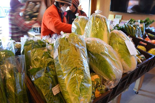 冬には名物、岩沼白菜が!