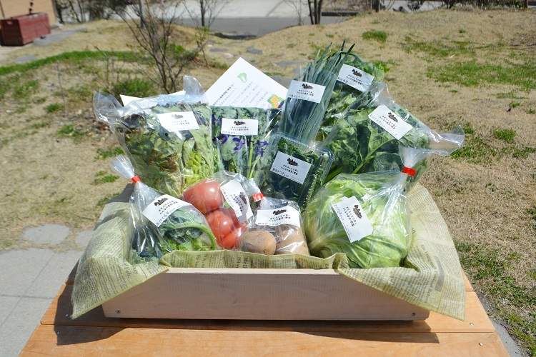 3月31日(土)に出荷した野菜はコチラです!