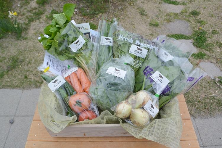 4月14日(土)に出荷した野菜はコチラです!