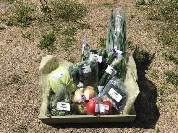 4月20日(土)に出荷した野菜はコチラです!